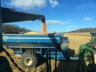 Harvesting corn & using left overs for paper-making